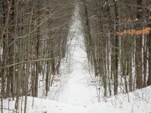 fat bike friendly ski trails